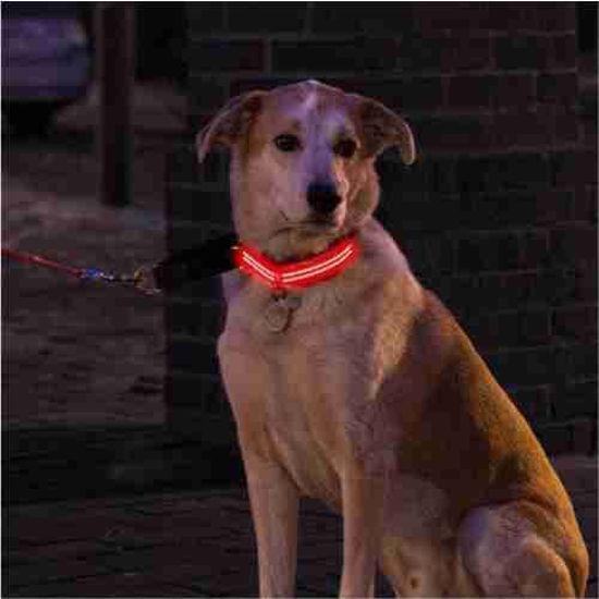 4Id Weatherproof Led Lite Up Dog Collar (Red) (Large)